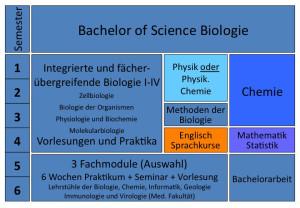 Übersichtsplan über den Aufbau des Bachelorstudiums Biologie